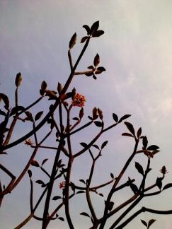 chiang mai flowers